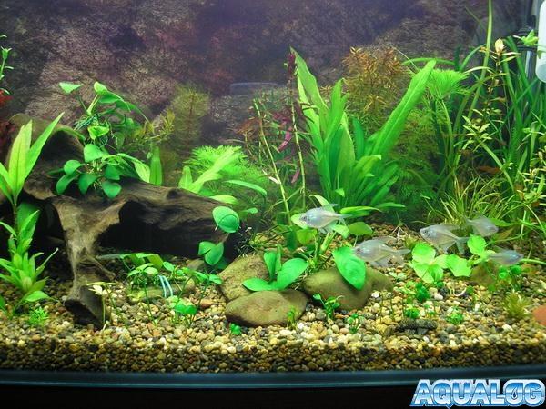 первый самодельный аквас