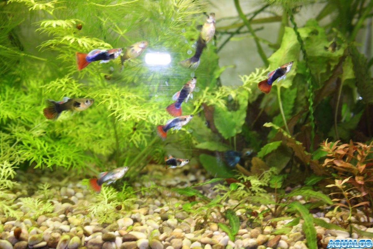 аква 125