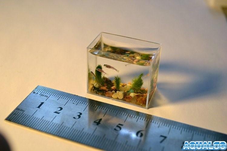 микро-аквариум