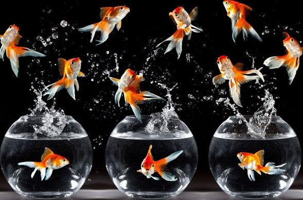 Карантин для рыбок