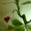 роза и бамбук