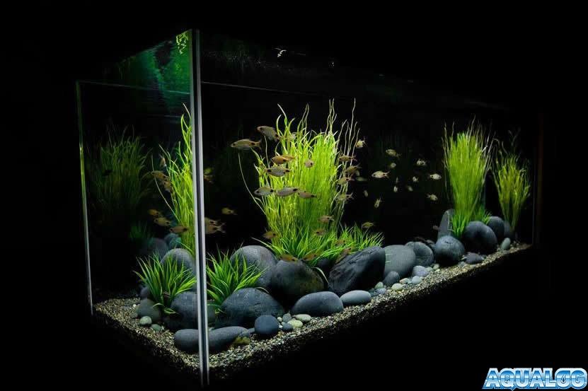 Искусственный аквариум