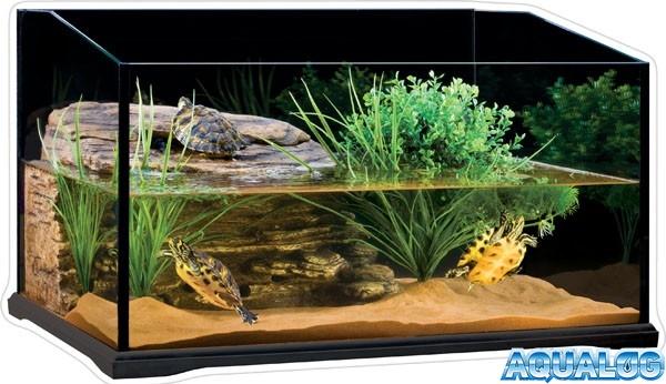 аквариум черепах