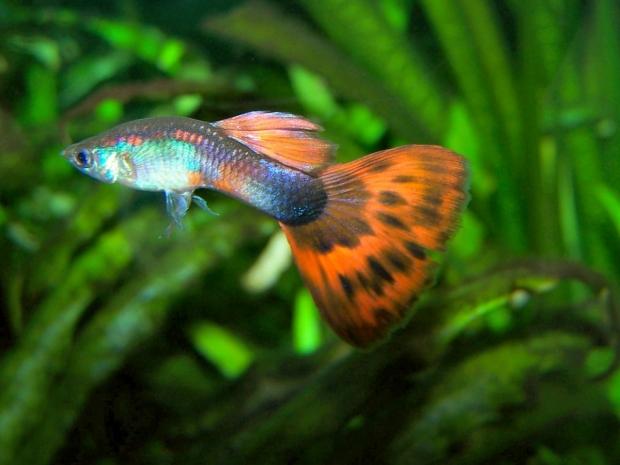 Аквариумные рыбы для начинающих