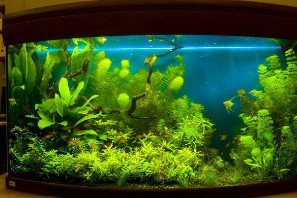 Как правильно декорировать аквариум
