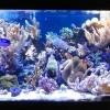 Морской аквариум и морская аквариумистика