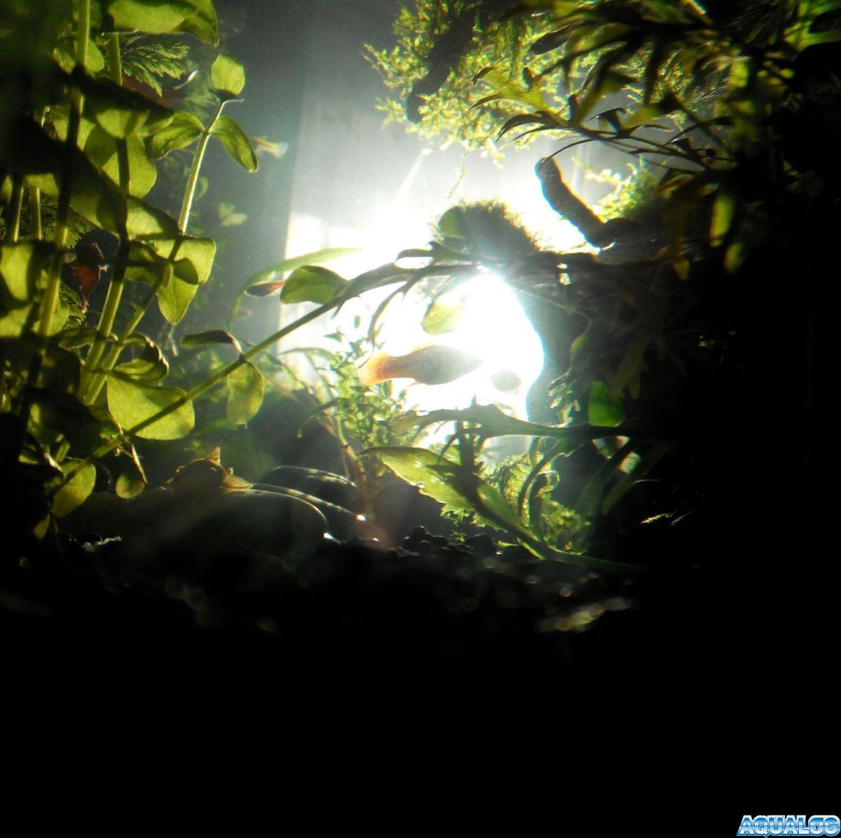 Утро в волшебном лесу