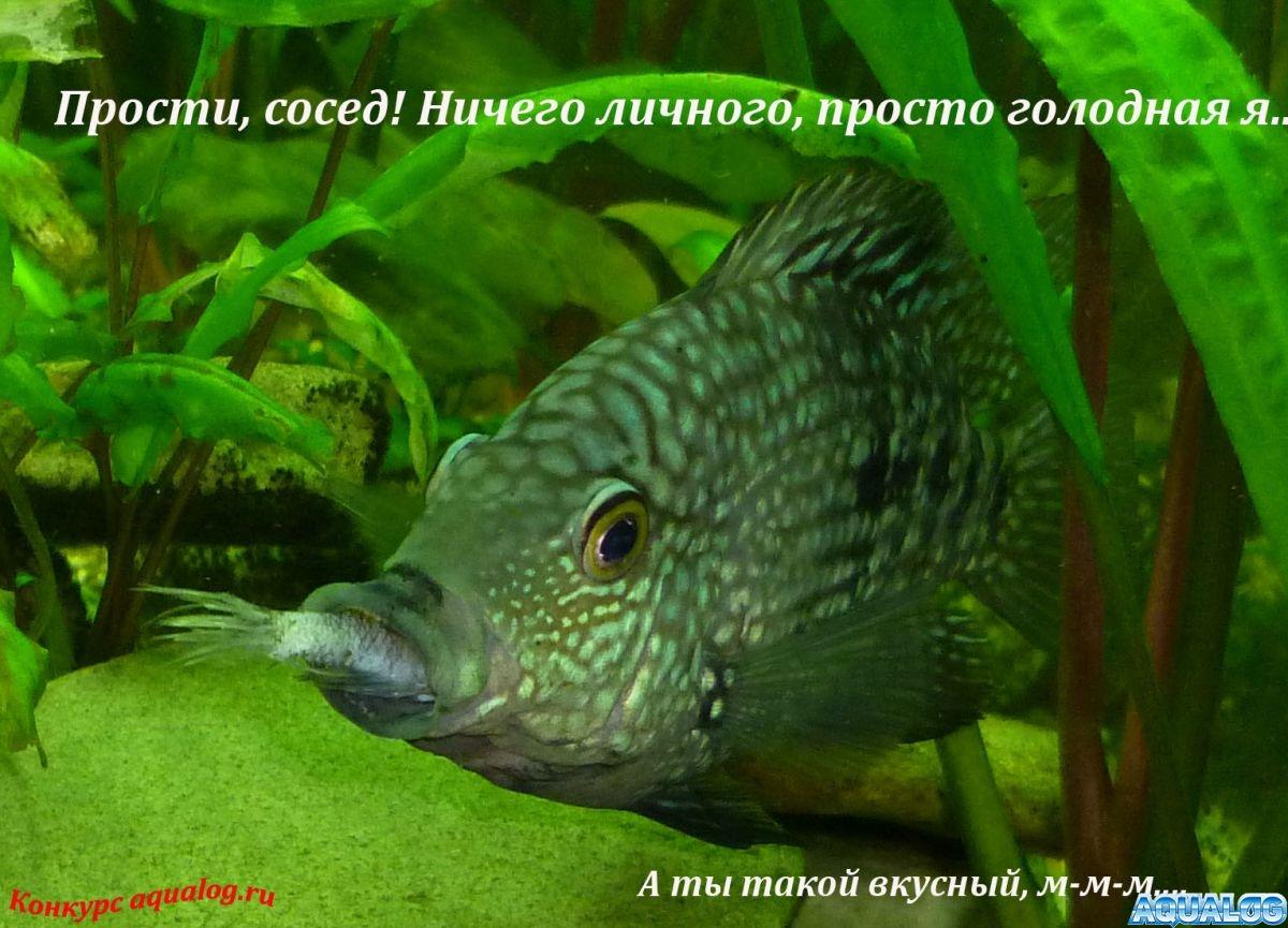 gallery_3072_207_100917.jpg