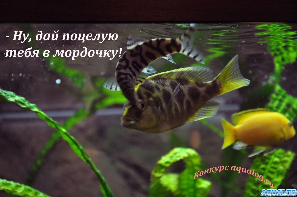 gallery_3072_207_429887.jpg