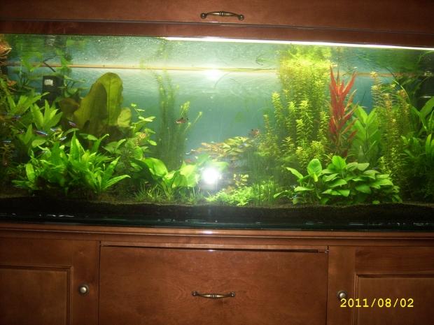 старый аквариум