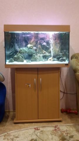 Вид аквариума с фронтозами