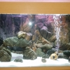 Общий вид аквариума с фронтозами