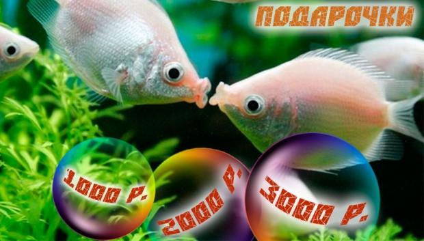 Осений видео конкурс Aqualog.ru