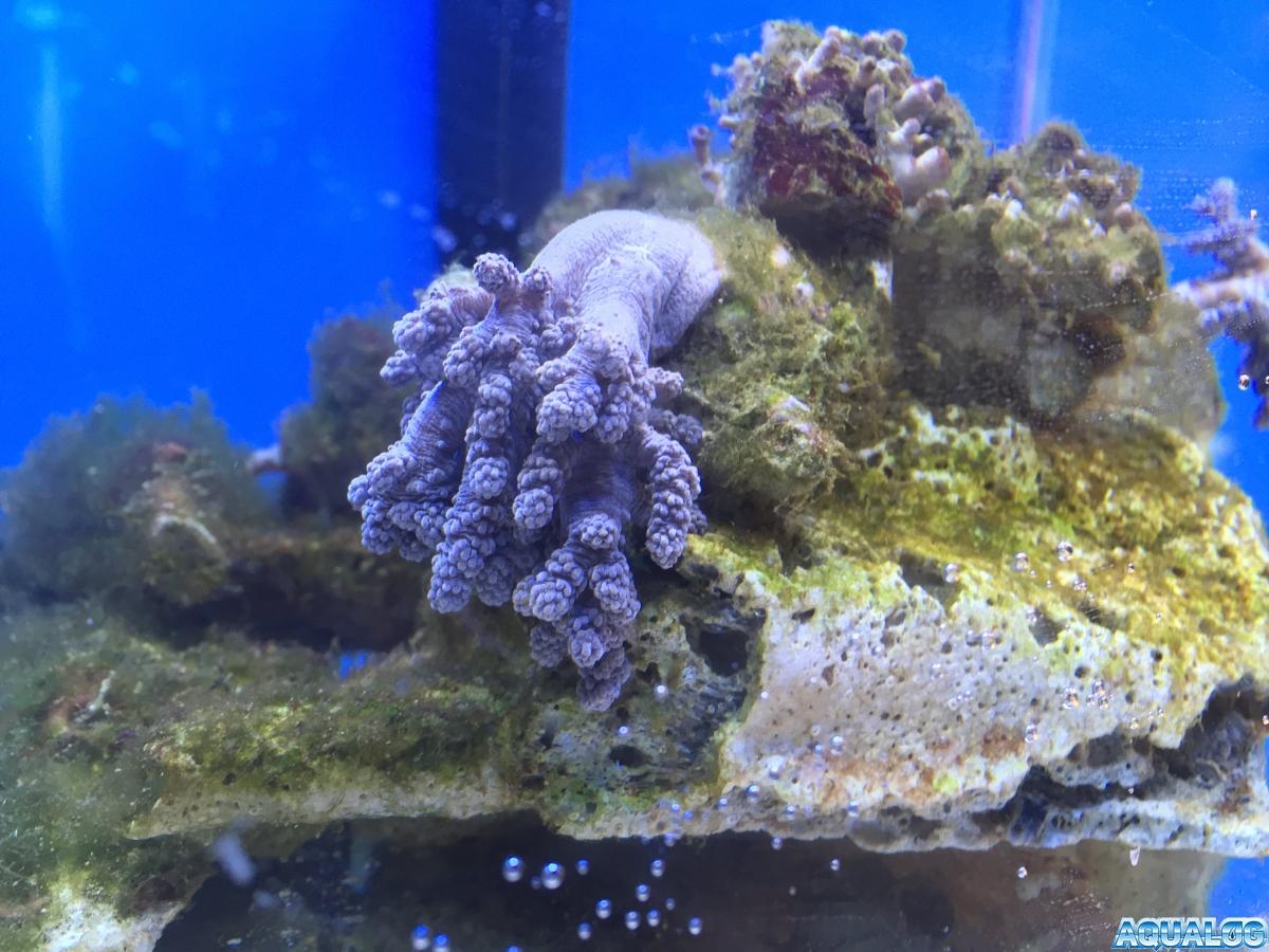 Nano reef 7