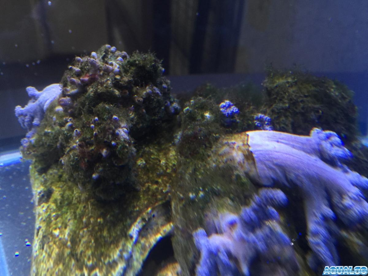 Nano reef 9