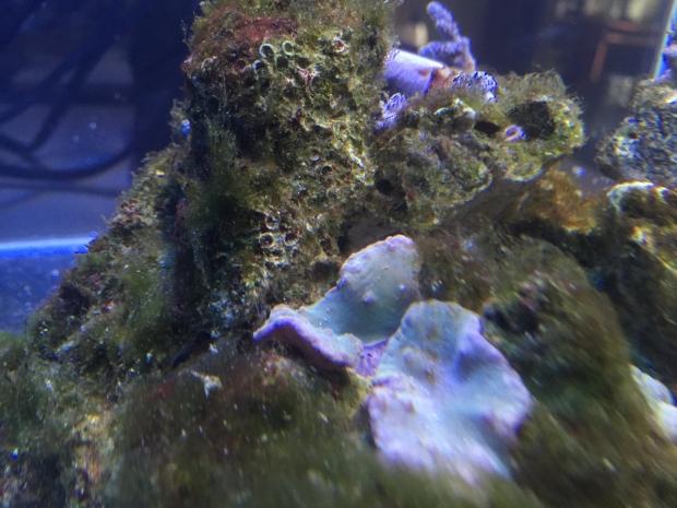 Nano reef 10