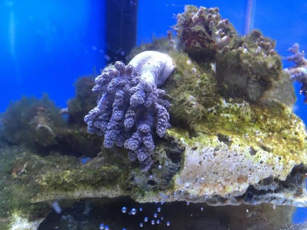 Nano reef 6