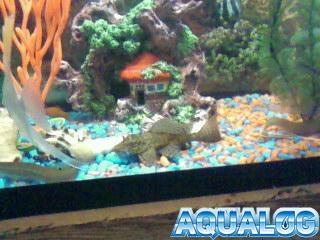 Аквариумы с рыбками