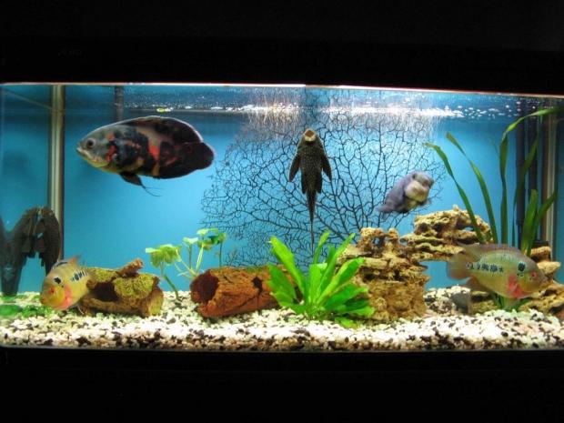 Общий вид аквариума