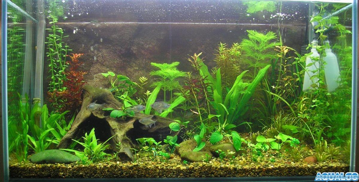 Растения пошли в рост