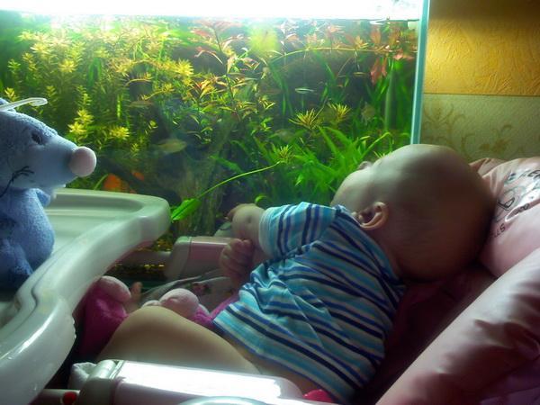 Мой сын начинающий аквариумист