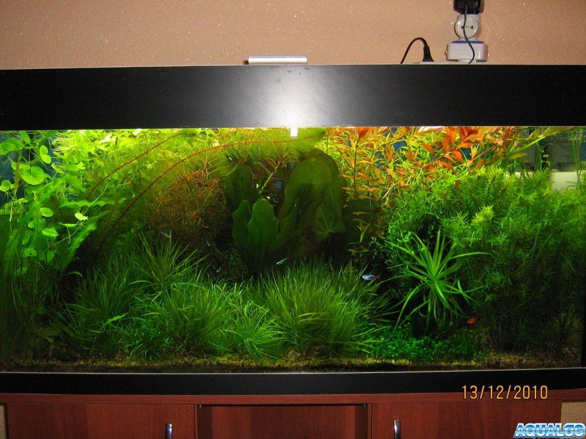Мой любимый аквариум