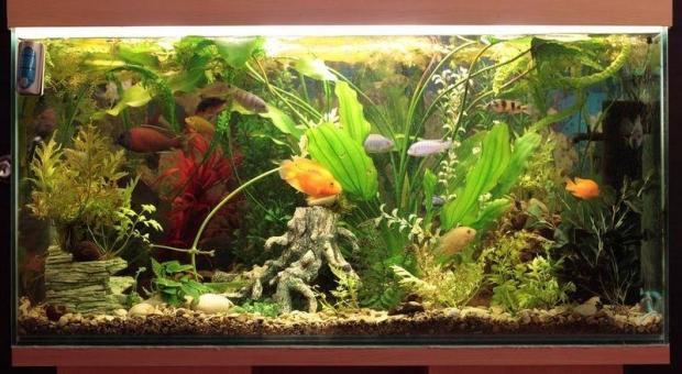 Рыбки--043.JPG