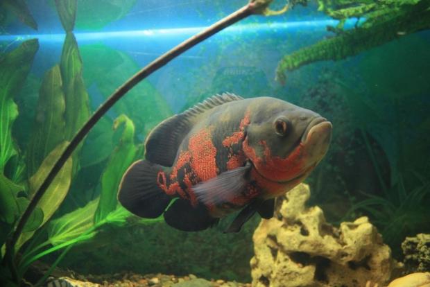 Рыбса