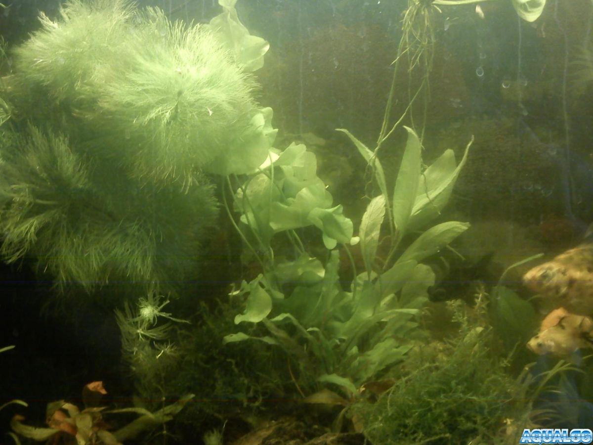 мои рыбушки и растюшки