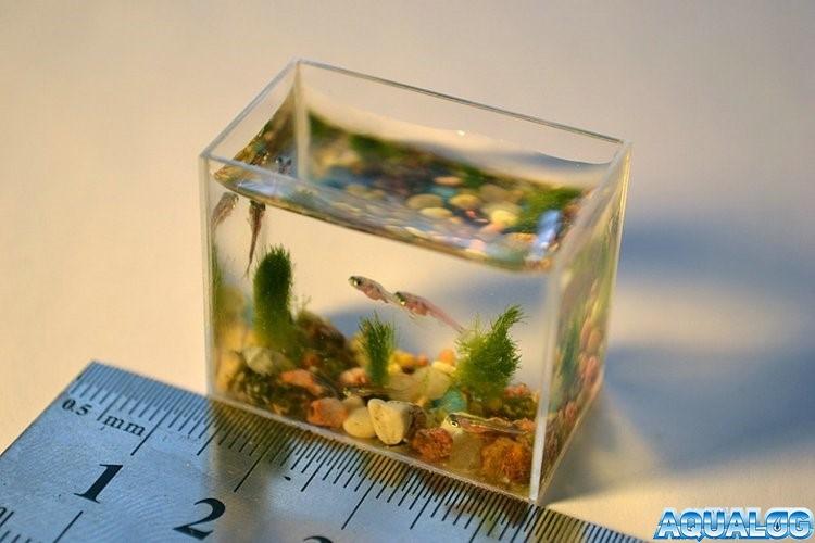 самый миниатюрный аквариум