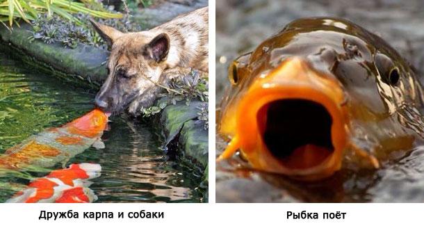 певица и собака