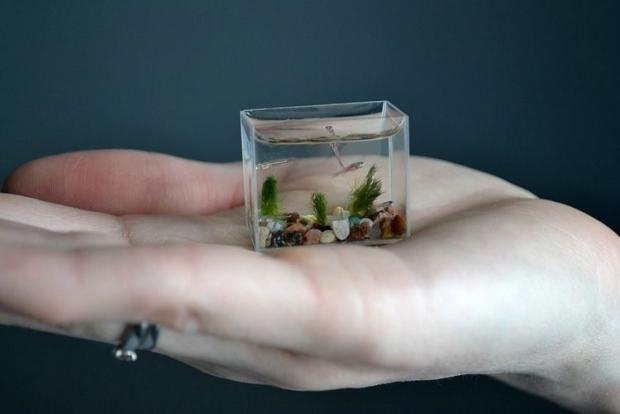 Микро аквариум