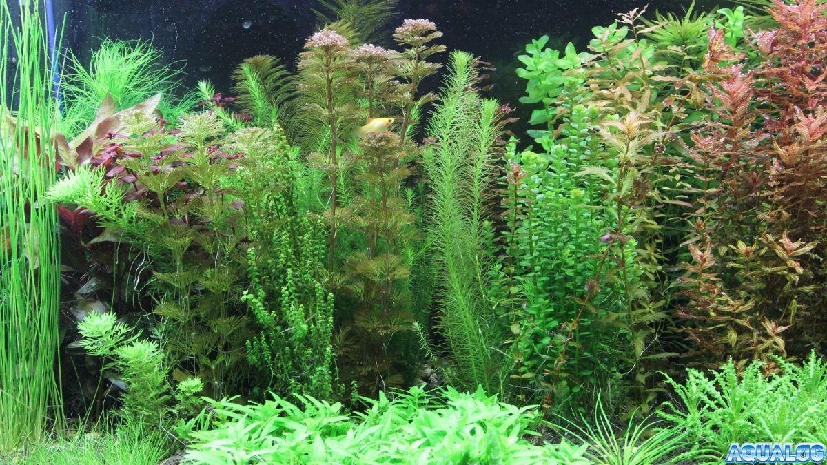 Мои аквариумы.