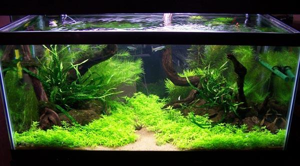 Как правильно подобрать растения для аквариума