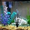 Оптимальная температура для аквариумных рыб
