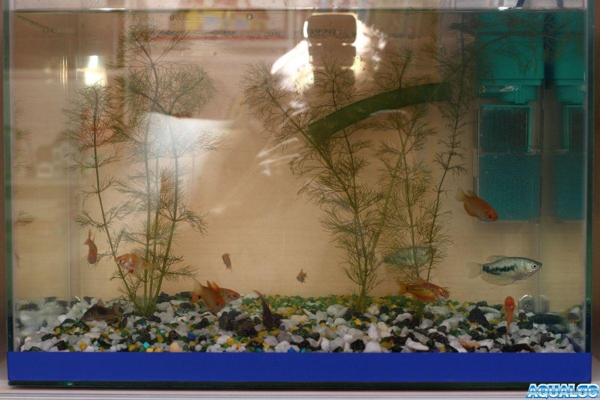 Мой аквариум 35 литров