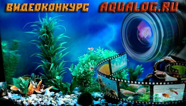 Видео конкурс Aqualog.ru
