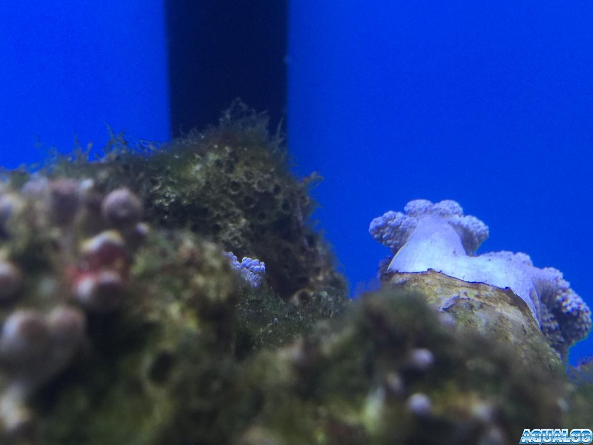 Nano reef 8