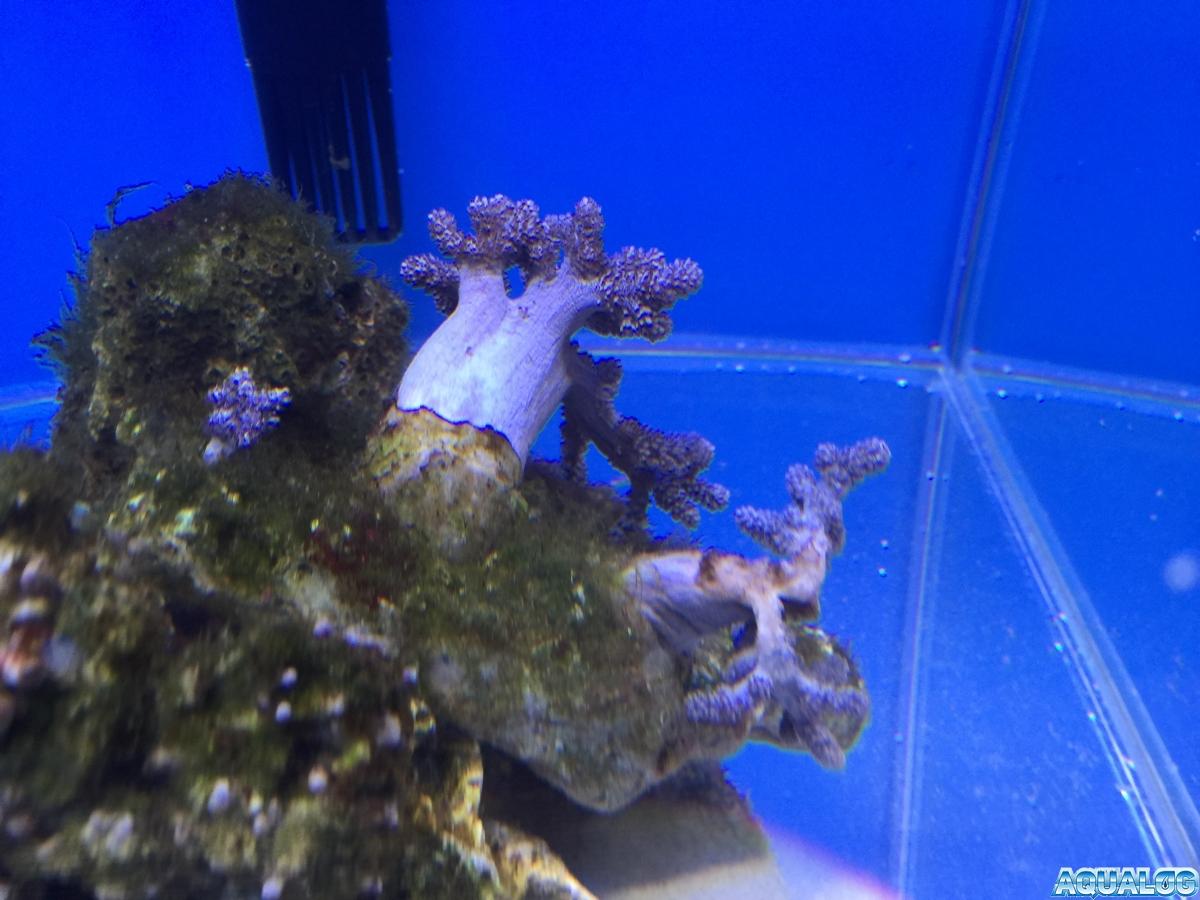 Nano reef 2