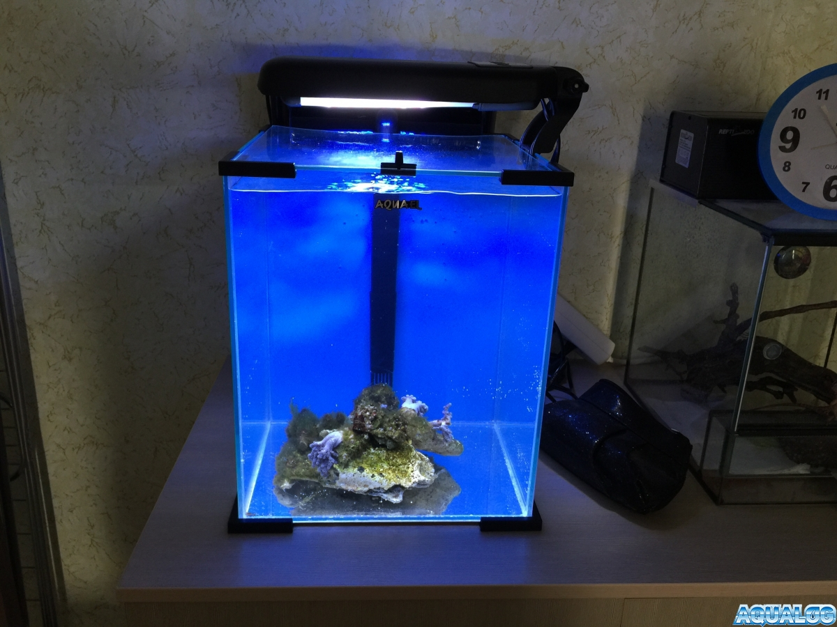 Nano reef 11